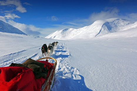 Huskyexpedition Vindelfjällen